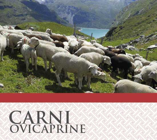 Carni Ovine Caprine T&G